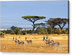 The Safari And Animals Acrylic Print by Boon Mee