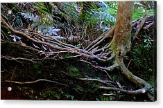 The Salamander Tree Acrylic Print by Evelyn Tambour