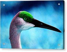 The Sandhilll Crane  Acrylic Print