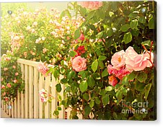 The Scent Of Roses And A White Fence Acrylic Print by Sabine Jacobs