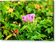 The Season Of Ripening - Featured 3 Acrylic Print