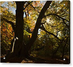 Acrylic Print featuring the photograph The Secret Forest by Jose Oquendo