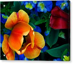 The Secret Life Of Tulips Acrylic Print by Rory Sagner