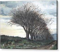 The Sentinels Acrylic Print by Brenda Owen