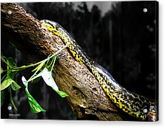 The Serpent Acrylic Print by Dick Botkin