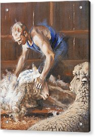 The Shearing Acrylic Print by Mia DeLode