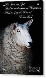 The Sheep Of His Hand Acrylic Print