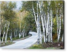 The Shelburne Birches Acrylic Print by Harry H Hicklin