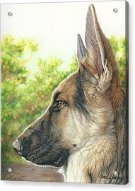 The Shepherd Watching Acrylic Print