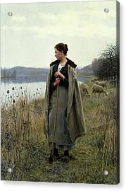 The Shepherdess Of Rolleboise Acrylic Print by Daniel Ridgway Knight
