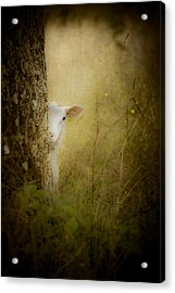 The Shy Lamb Acrylic Print by Loriental Photography
