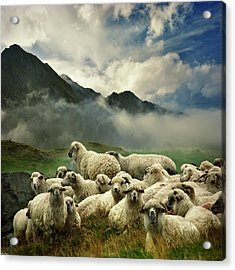 The Silence Of The Lambs Acrylic Print