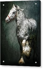 The Silver Gypsy Acrylic Print by Brian Tarr