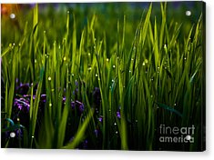 The Simple Things Acrylic Print