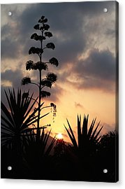 Acrylic Print featuring the photograph The Sky by Janina  Suuronen