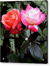 Acrylic Print featuring the photograph The Smell Of Roses by James C Thomas