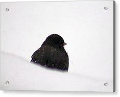 The Snow Thinker Acrylic Print