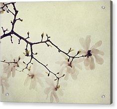The Soft Explosion Acrylic Print by Irene Suchocki