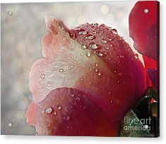 Acrylic Print featuring the photograph The Soft Kiss Of Dew II by Debbie Portwood