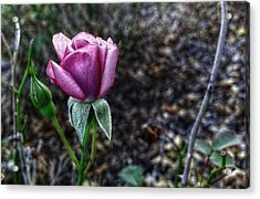 The Solitary One Acrylic Print by Linda Unger