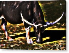 The Sparks Of Water Buffalo Acrylic Print