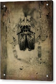 The Spider Series Xiii Acrylic Print by Marco Oliveira