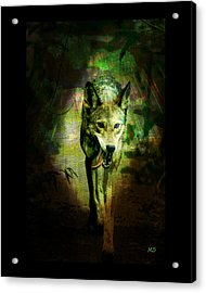 The Spirit Of The Wolf Acrylic Print by Absinthe Art By Michelle LeAnn Scott