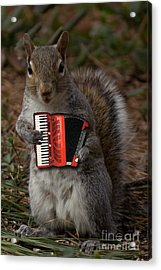 The Squirrel And His Accordion Acrylic Print
