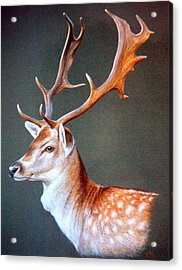 Acrylic Print featuring the painting The Stag by Rosemary Colyer