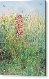 The Stalker Acrylic Print by John Hebb