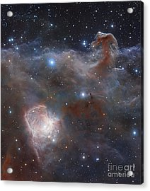 The Star-forming Region Ngc 2024 Acrylic Print by Robert Gendler