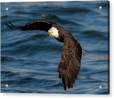 The Stare   Acrylic Print by Glenn Lawrence