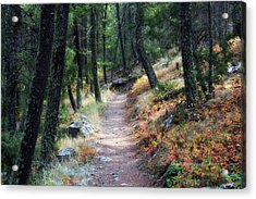 The Start... Acrylic Print by Michele Richter