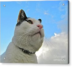 The Stoic Heroic Look Of A Cat Acrylic Print