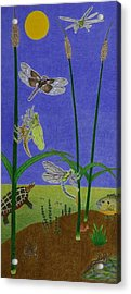 The Story Of The Dragonfly With Description Acrylic Print