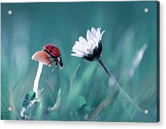 The Story Of The Lady Bug That Tries To Convice The Mushroom To Have A Date With The Beautiful Daisy Acrylic Print