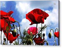 The Summer Poppy Acrylic Print
