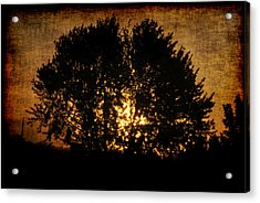 The Sun Behind The Tree Acrylic Print by Frederico Borges