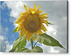 Acrylic Print featuring the photograph The Sun Is Out by Arthur Fix
