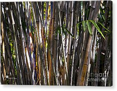 The Sun Through Bamboo Acrylic Print by Sally Simon