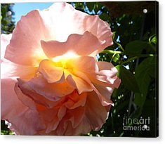 The Sun Within Acrylic Print by Anat Gerards