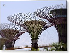 The Supertrees Acrylic Print