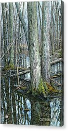 The Swamp 3 Acrylic Print