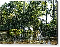 The Swamp Acrylic Print by Ralph Jones