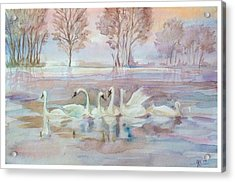 The Swan Lake Acrylic Print