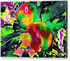 The Temptation Acrylic Print by Martin Howard