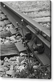 The Tenacity Of Nature Greyscale Acrylic Print by MM Anderson