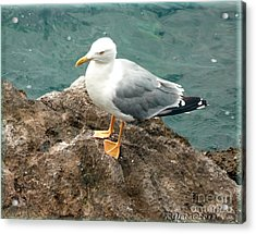 The Thinker - Seagull Photography By Giada Rossi Acrylic Print