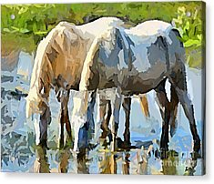 The Thirst Acrylic Print by Dragica  Micki Fortuna