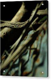 The Thread Acrylic Print by Rebecca Sherman